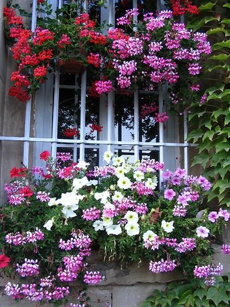 Fenêtres du Jardin